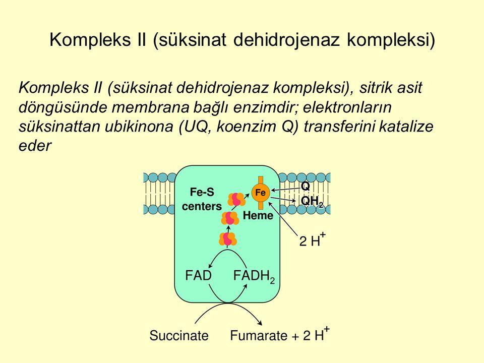 Kompleks II (süksinat dehidrojenaz kompleksi), sitrik asit döngüsünde membrana bağlı enzimdir; elektronların süksinattan ubikinona (UQ, koenzim Q) tra