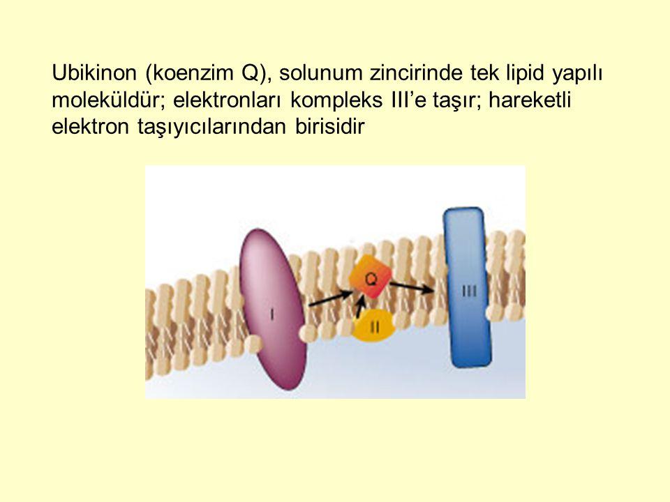 Ubikinon (koenzim Q), solunum zincirinde tek lipid yapılı moleküldür; elektronları kompleks III'e taşır; hareketli elektron taşıyıcılarından birisidir