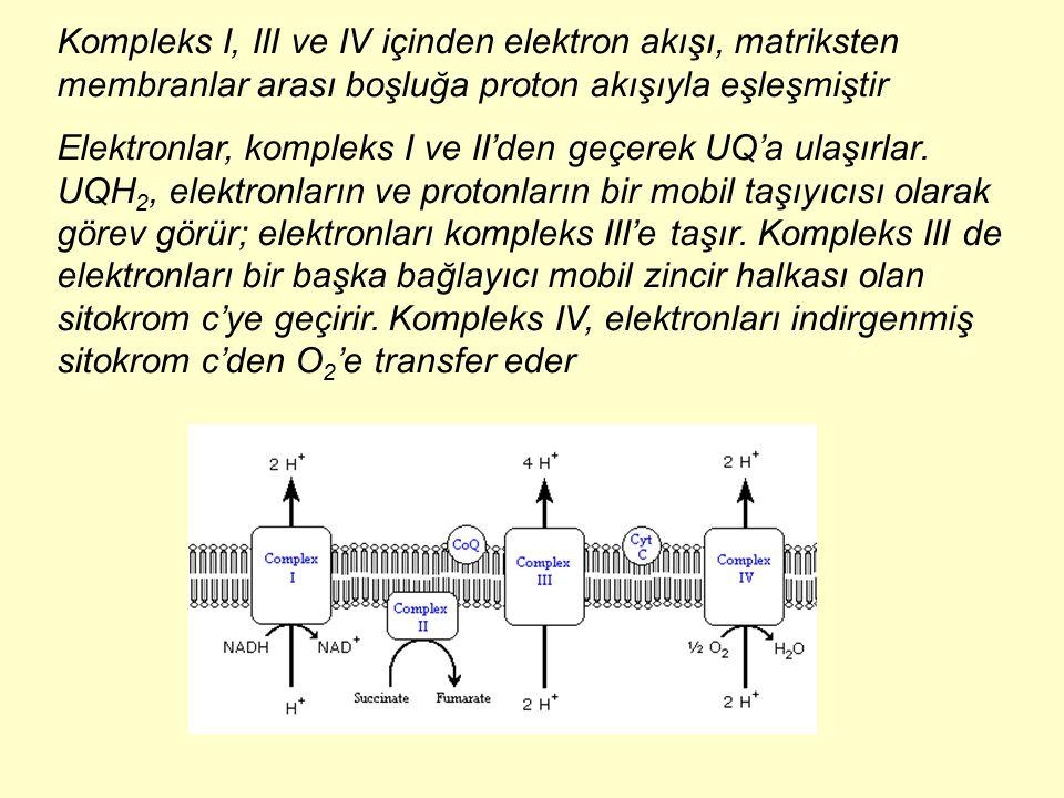 Kompleks I, III ve IV içinden elektron akışı, matriksten membranlar arası boşluğa proton akışıyla eşleşmiştir Elektronlar, kompleks I ve II'den geçere
