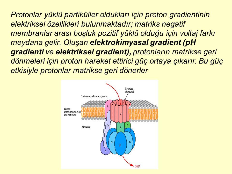 Protonlar yüklü partiküller oldukları için proton gradientinin elektriksel özellikleri bulunmaktadır; matriks negatif membranlar arası boşluk pozitif