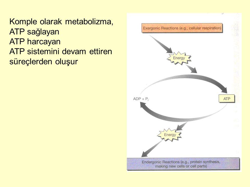 Komple olarak metabolizma, ATP sağlayan ATP harcayan ATP sistemini devam ettiren süreçlerden oluşur
