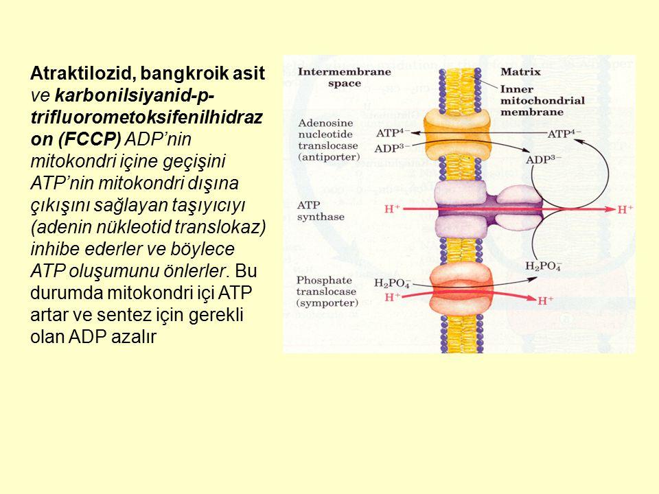 Atraktilozid, bangkroik asit ve karbonilsiyanid-p- trifluorometoksifenilhidraz on (FCCP) ADP'nin mitokondri içine geçişini ATP'nin mitokondri dışına ç