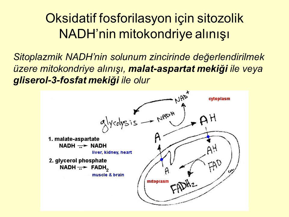 Sitoplazmik NADH'nin solunum zincirinde değerlendirilmek üzere mitokondriye alınışı, malat-aspartat mekiği ile veya gliserol-3-fosfat mekiği ile olur