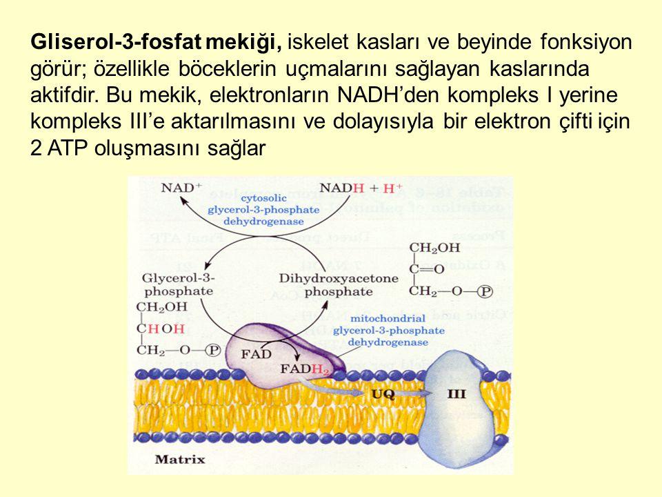 Gliserol-3-fosfat mekiği, iskelet kasları ve beyinde fonksiyon görür; özellikle böceklerin uçmalarını sağlayan kaslarında aktifdir. Bu mekik, elektron