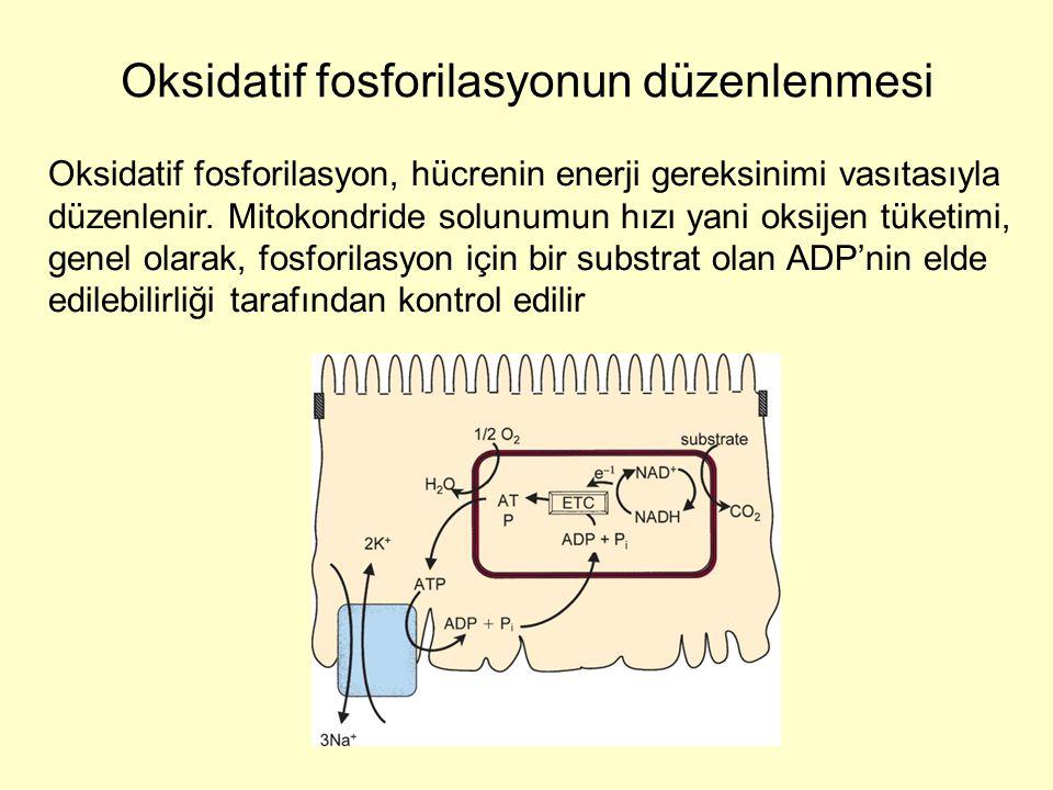Oksidatif fosforilasyon, hücrenin enerji gereksinimi vasıtasıyla düzenlenir. Mitokondride solunumun hızı yani oksijen tüketimi, genel olarak, fosforil