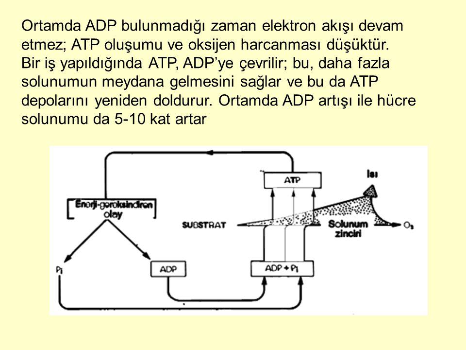 Ortamda ADP bulunmadığı zaman elektron akışı devam etmez; ATP oluşumu ve oksijen harcanması düşüktür. Bir iş yapıldığında ATP, ADP'ye çevrilir; bu, da