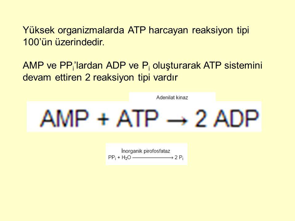 Yüksek organizmalarda ATP harcayan reaksiyon tipi 100'ün üzerindedir. AMP ve PP i 'lardan ADP ve P i oluşturarak ATP sistemini devam ettiren 2 reaksiy