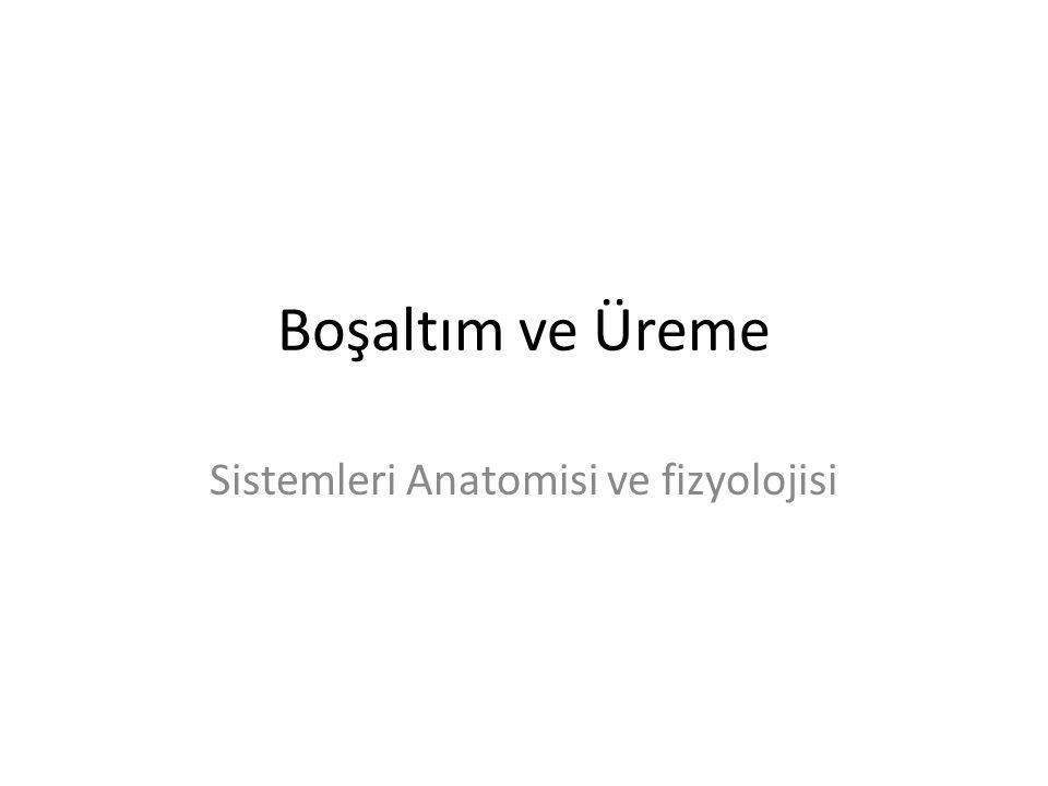 Boşaltım ve Üreme Sistemleri Anatomisi ve fizyolojisi