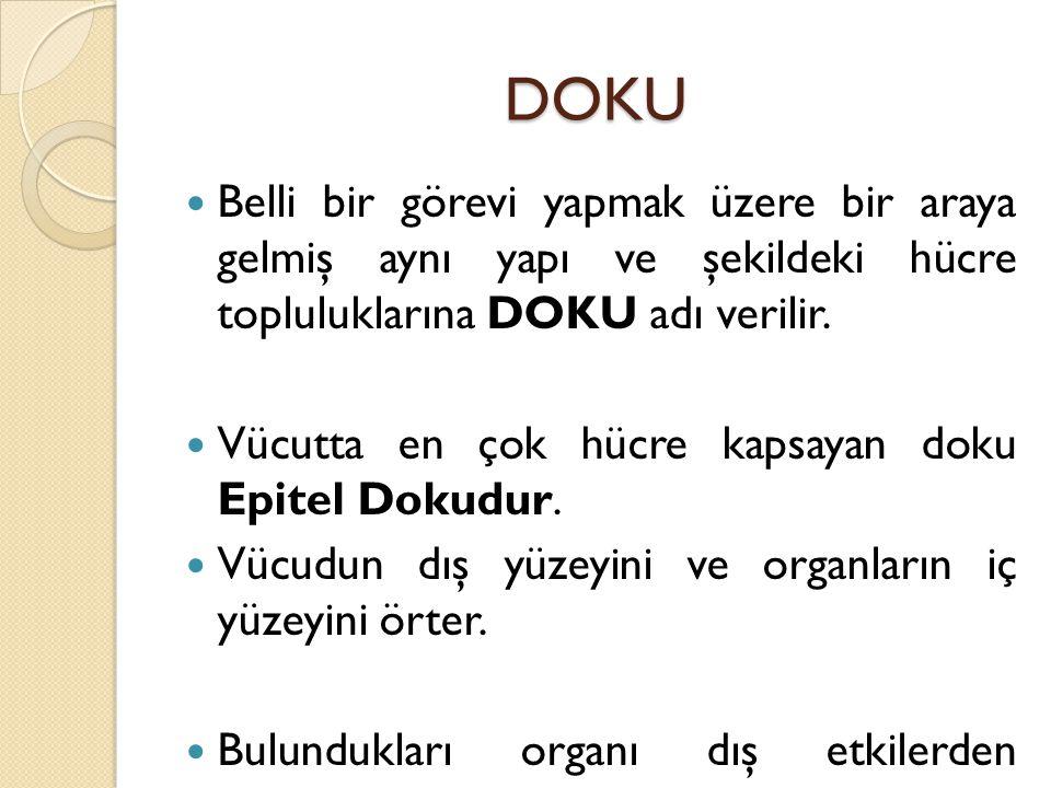 DOKU Belli bir görevi yapmak üzere bir araya gelmiş aynı yapı ve şekildeki hücre topluluklarına DOKU adı verilir. Vücutta en çok hücre kapsayan doku E