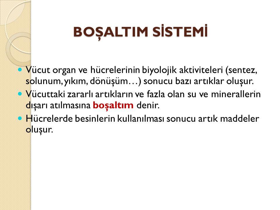 BOŞALTIM S İ STEM İ Vücut organ ve hücrelerinin biyolojik aktiviteleri (sentez, solunum, yıkım, dönüşüm…) sonucu bazı artıklar oluşur. Vücuttaki zarar