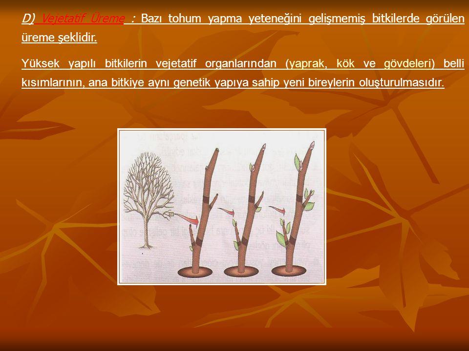 D) Vejetatif Üreme : Bazı tohum yapma yeteneğini gelişmemiş bitkilerde görülen üreme şeklidir. Yüksek yapılı bitkilerin vejetatif organlarından (yapra
