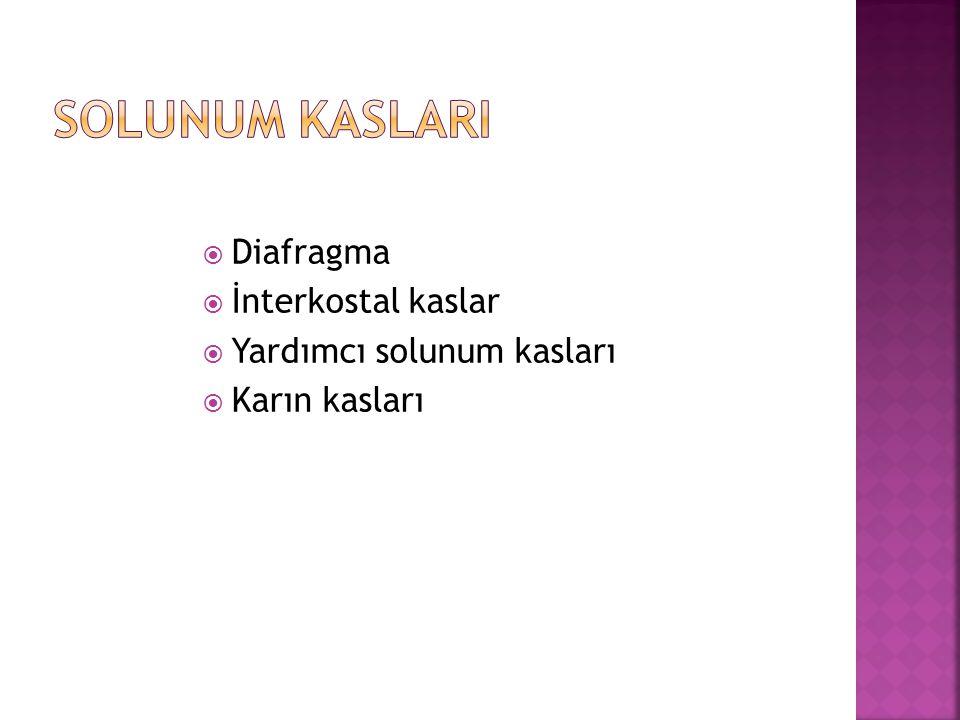  Diafragma  İnterkostal kaslar  Yardımcı solunum kasları  Karın kasları