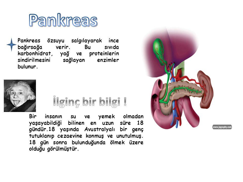 Pankreas özsuyu salgılayarak ince bağırsağa verir. Bu sıvıda karbonhidrat, yağ ve proteinlerin sindirilmesini sağlayan enzimler bulunur. Bir insanın s