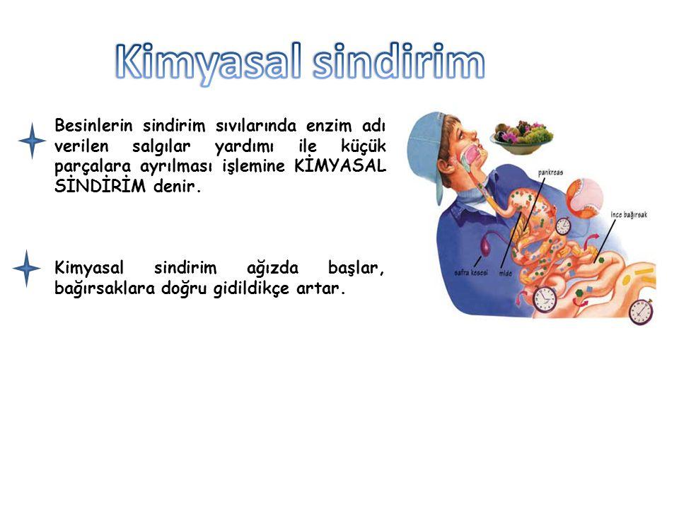 Karaciğer ince bağırsağa safra salgısı salgılar Çeşitli maddeler içeren safra yağların mekanik parçalanmasını sağlar.