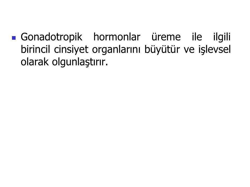 Gonadotropik hormonlar üreme ile ilgili birincil cinsiyet organlarını büyütür ve işlevsel olarak olgunlaştırır.