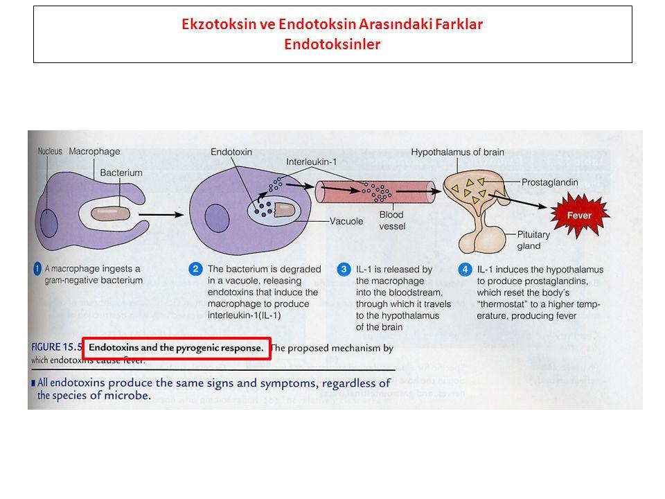 Ekzotoksin ve Endotoksin Arasındaki Farklar Endotoksinler