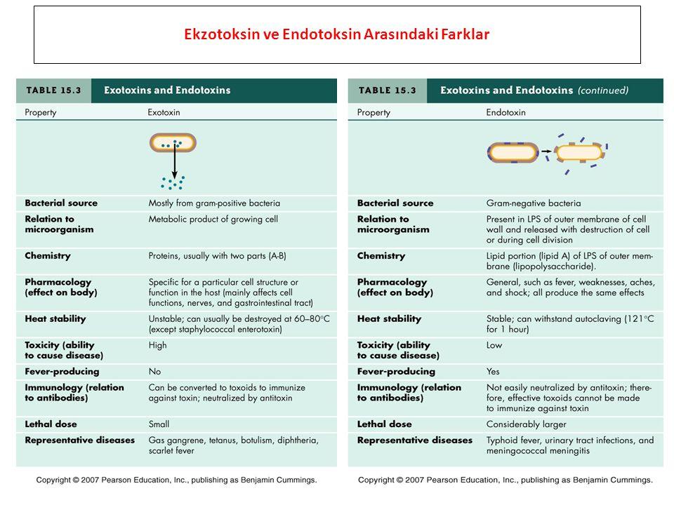 Ekzotoksin ve Endotoksin Arasındaki Farklar