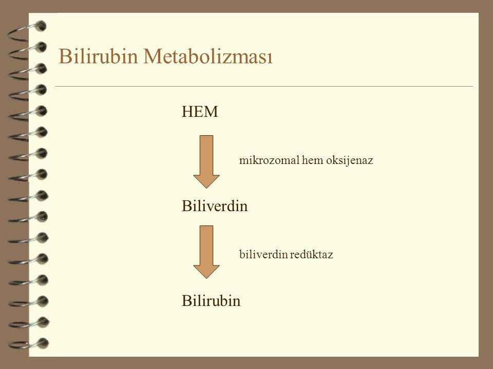 Bilirubin Metabolizması HEM mikrozomal hem oksijenaz Biliverdin biliverdin redüktaz Bilirubin