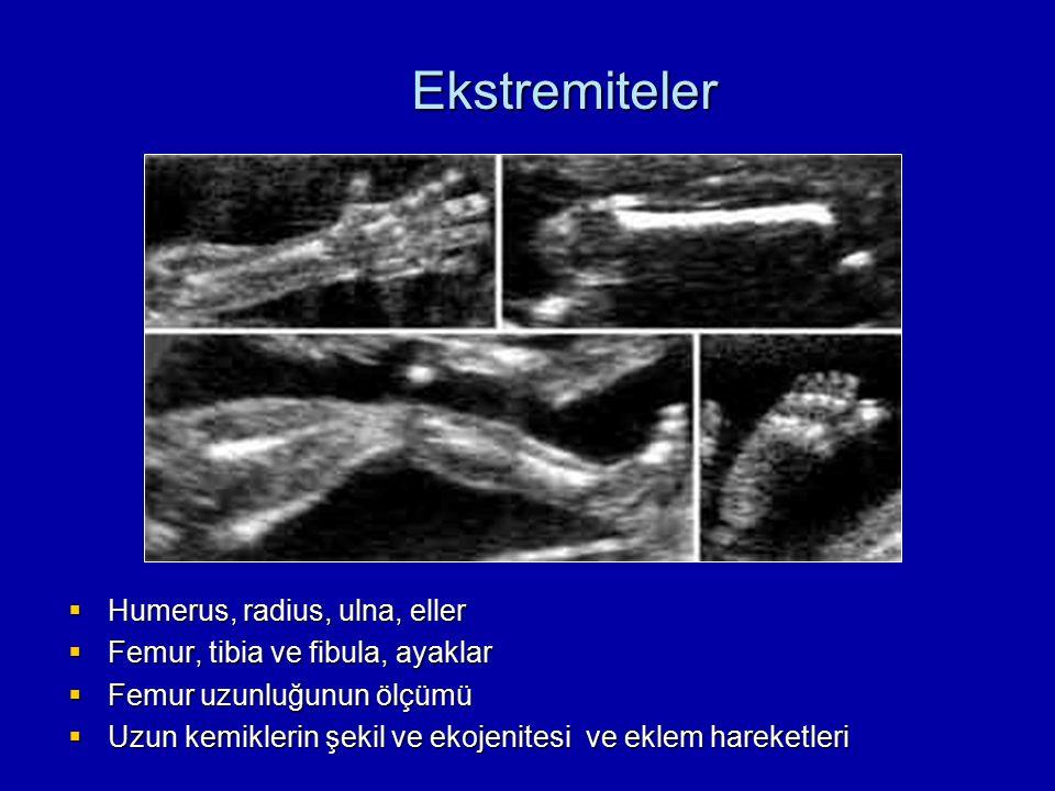  Humerus, radius, ulna, eller  Femur, tibia ve fibula, ayaklar  Femur uzunluğunun ölçümü  Uzun kemiklerin şekil ve ekojenitesi ve eklem hareketler