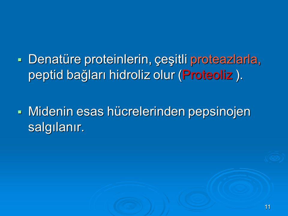 11  Denatüre proteinlerin, çeşitli proteazlarla, peptid bağları hidroliz olur (Proteoliz ).  Midenin esas hücrelerinden pepsinojen salgılanır.