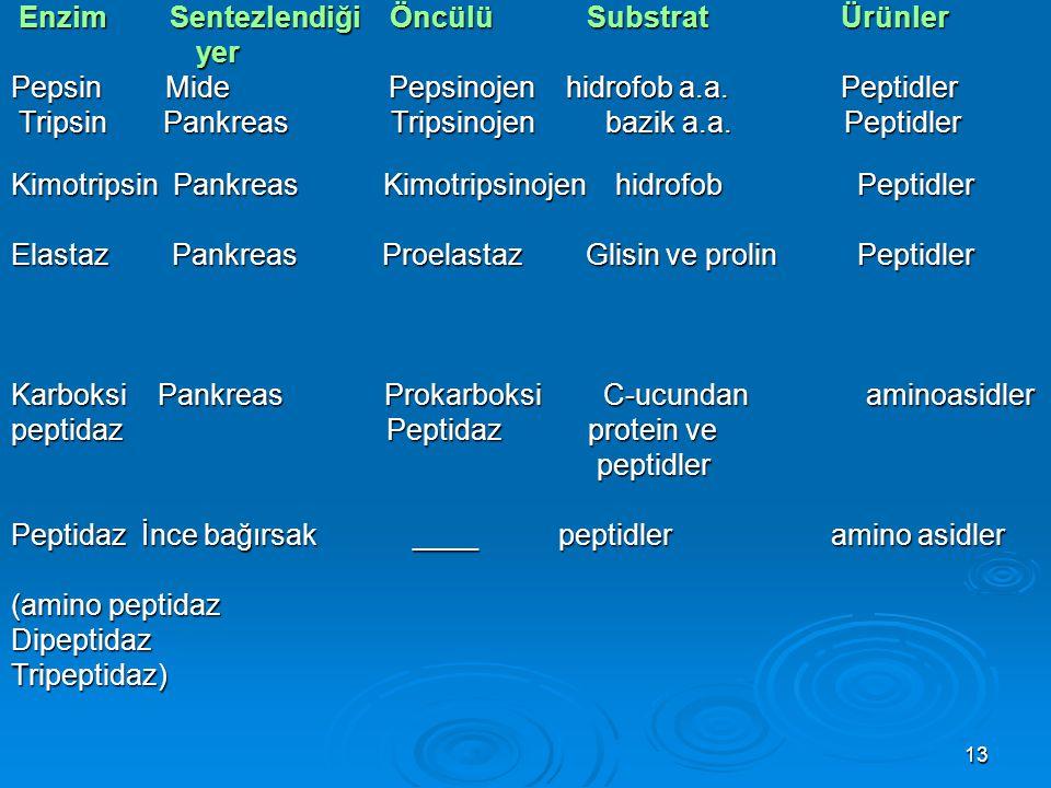 13 Enzim Sentezlendiği Öncülü Substrat Ürünler Enzim Sentezlendiği Öncülü Substrat Ürünler yer yer Pepsin Mide Pepsinojen hidrofob a.a. Peptidler Trip