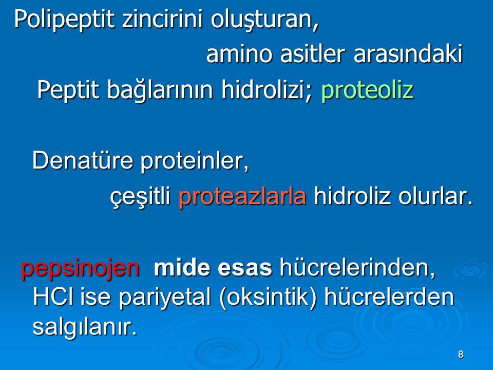 8 Polipeptit zincirini oluşturan, amino asitler arasındaki amino asitler arasındaki Peptit bağlarının hidrolizi; proteoliz Peptit bağlarının hidrolizi