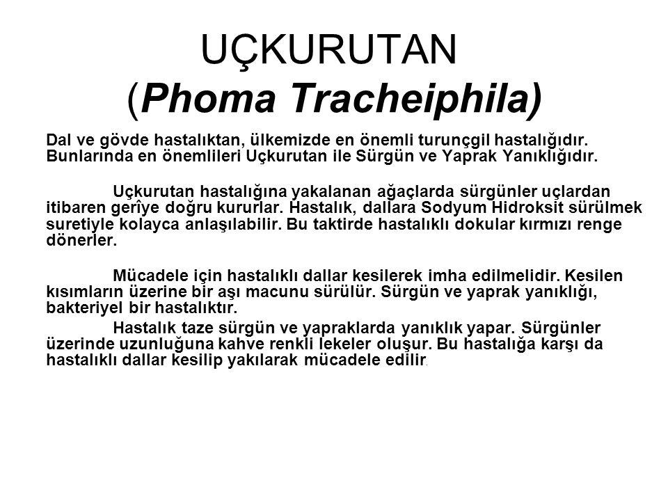 UÇKURUTAN (Phoma Tracheiphila) Dal ve gövde hastalıktan, ülkemizde en önemli turunçgil hastalığıdır. Bunlarında en önemlileri Uçkurutan ile Sürgün ve