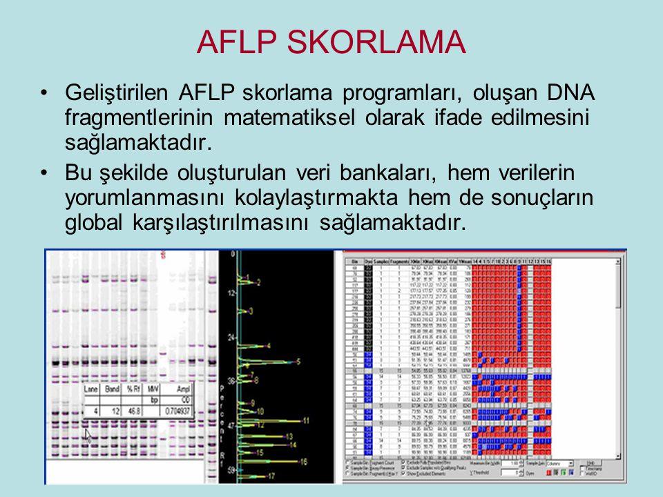 AFLP SKORLAMA Geliştirilen AFLP skorlama programları, oluşan DNA fragmentlerinin matematiksel olarak ifade edilmesini sağlamaktadır. Bu şekilde oluştu