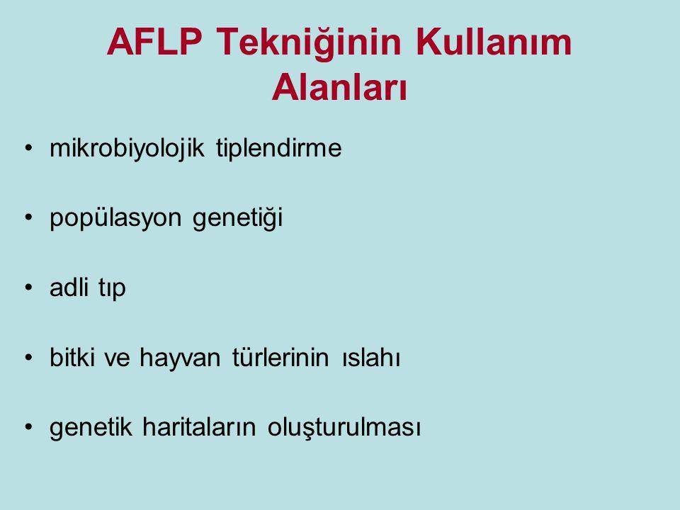 AFLP uygulama basamakları 1. DNA ekstraksiyonu işlemi yapılır.
