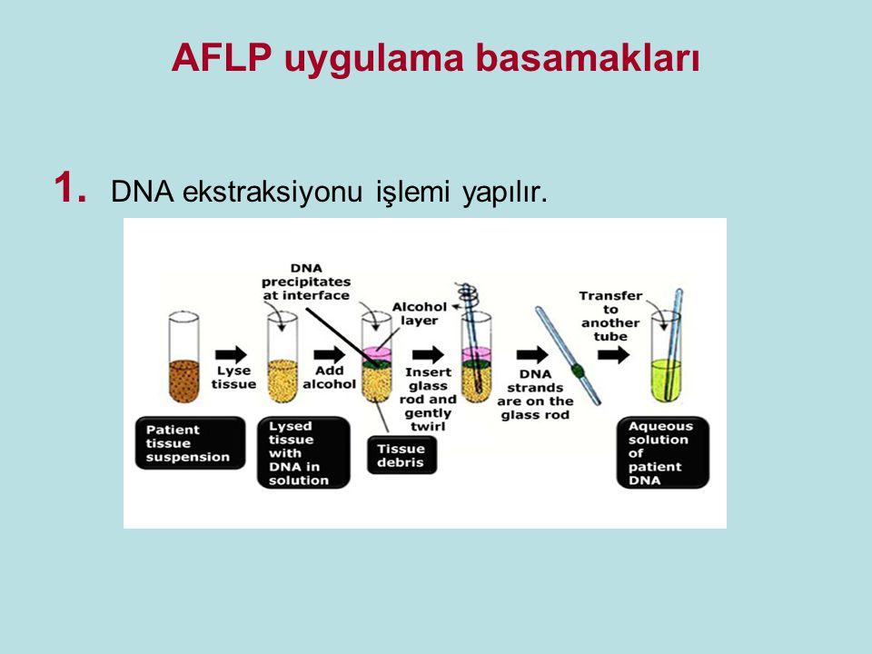 2.DNA'nın uygun restriksiyon enzimleri ile kesilir.