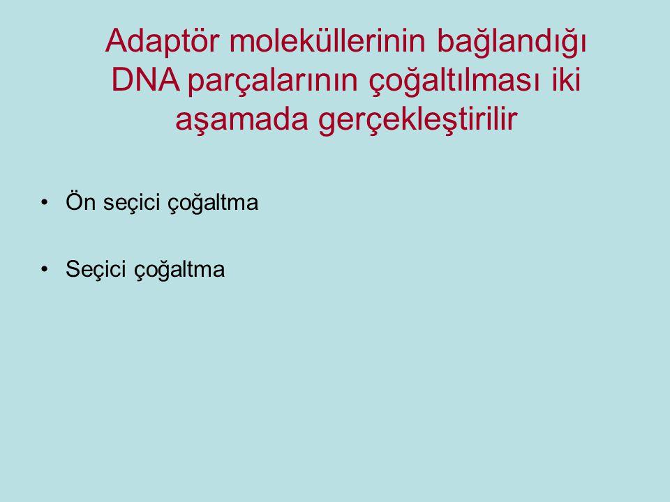 Ön seçici çoğaltma Seçici çoğaltma Adaptör moleküllerinin bağlandığı DNA parçalarının çoğaltılması iki aşamada gerçekleştirilir