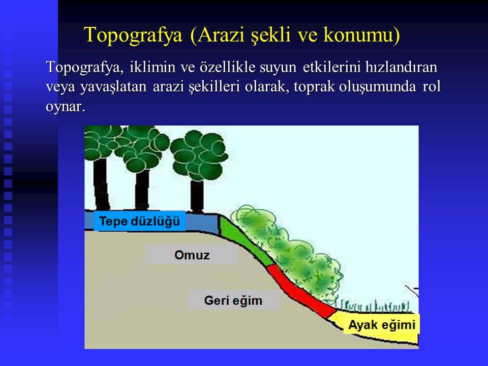 Topografya (Arazi şekli ve konumu) Topografya, iklimin ve özellikle suyun etkilerini hızlandıran veya yavaşlatan arazi şekilleri olarak, toprak oluşum