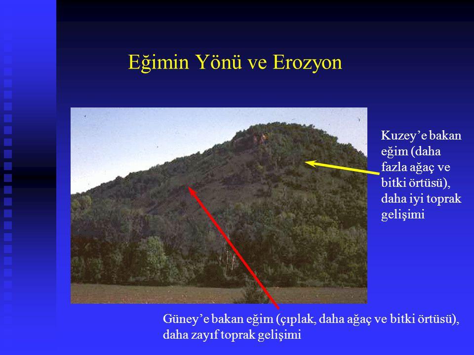 Güney'e bakan eğim (çıplak, daha ağaç ve bitki örtüsü), daha zayıf toprak gelişimi Kuzey'e bakan eğim (daha fazla ağaç ve bitki örtüsü), daha iyi topr