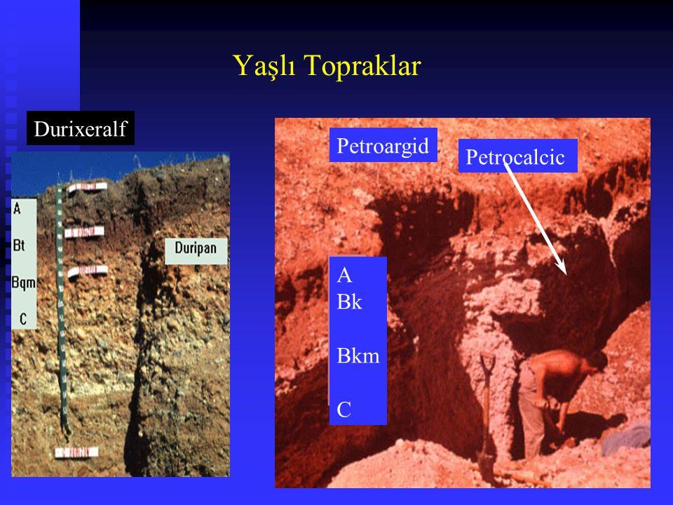 Petrocalcic Durixeralf Petroargid A Bk Bkm C Yaşlı Topraklar