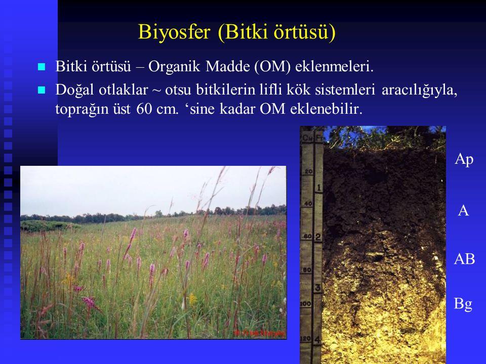n Bitki örtüsü – Organik Madde (OM) eklenmeleri. n Doğal otlaklar ~ otsu bitkilerin lifli kök sistemleri aracılığıyla, toprağın üst 60 cm. 'sine kadar