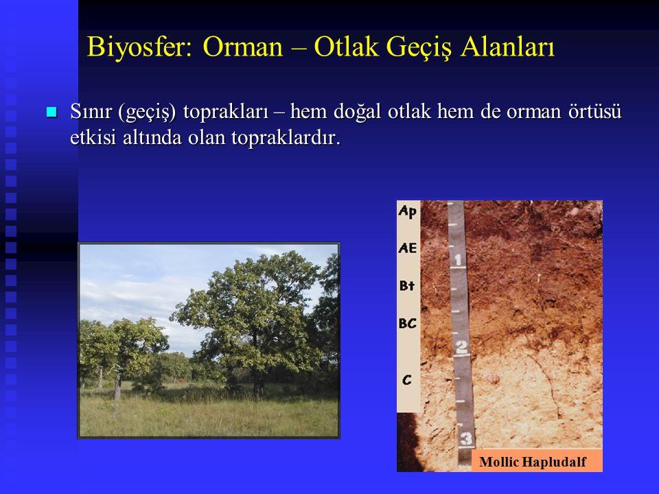 n Sınır (geçiş) toprakları – hem doğal otlak hem de orman örtüsü etkisi altında olan topraklardır. Biyosfer: Orman – Otlak Geçiş Alanları