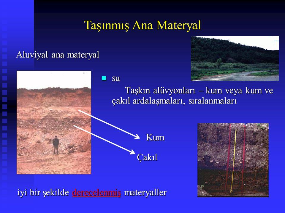 Taşınmış Ana Materyal n su Taşkın alüvyonları – kum veya kum ve çakıl ardalaşmaları, sıralanmaları Taşkın alüvyonları – kum veya kum ve çakıl ardalaşm