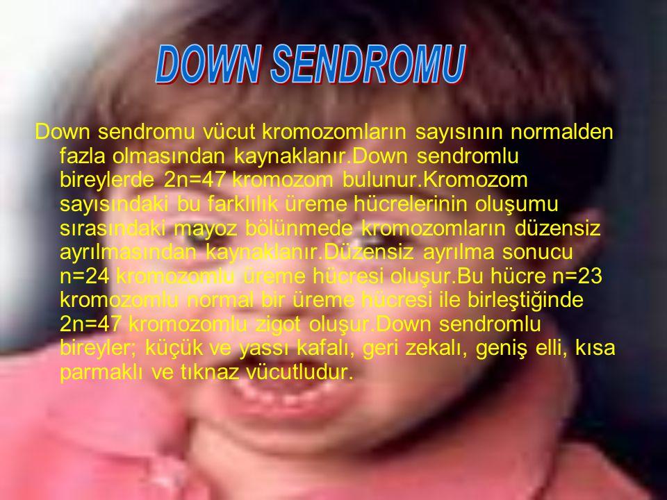 Down sendromu vücut kromozomların sayısının normalden fazla olmasından kaynaklanır.Down sendromlu bireylerde 2n=47 kromozom bulunur.Kromozom sayısında