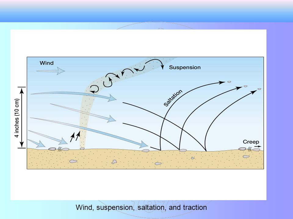 Wind, suspension, saltation, and traction