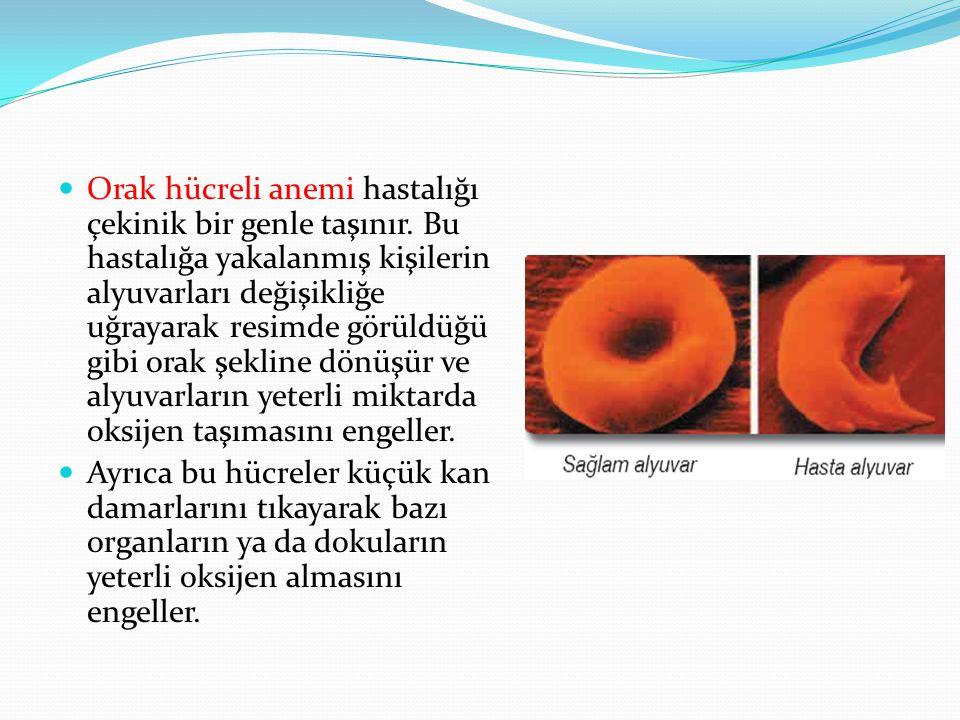 Orak hücreli anemi hastalığı çekinik bir genle taşınır. Bu hastalığa yakalanmış kişilerin alyuvarları değişikliğe uğrayarak resimde görüldüğü gibi ora