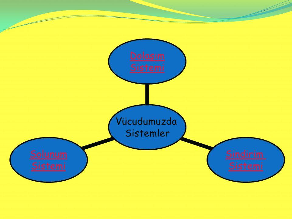 Vücudumuzda Sistemler Dolaşım Sistemi Sindirim Sistemi Solunum Sistemi