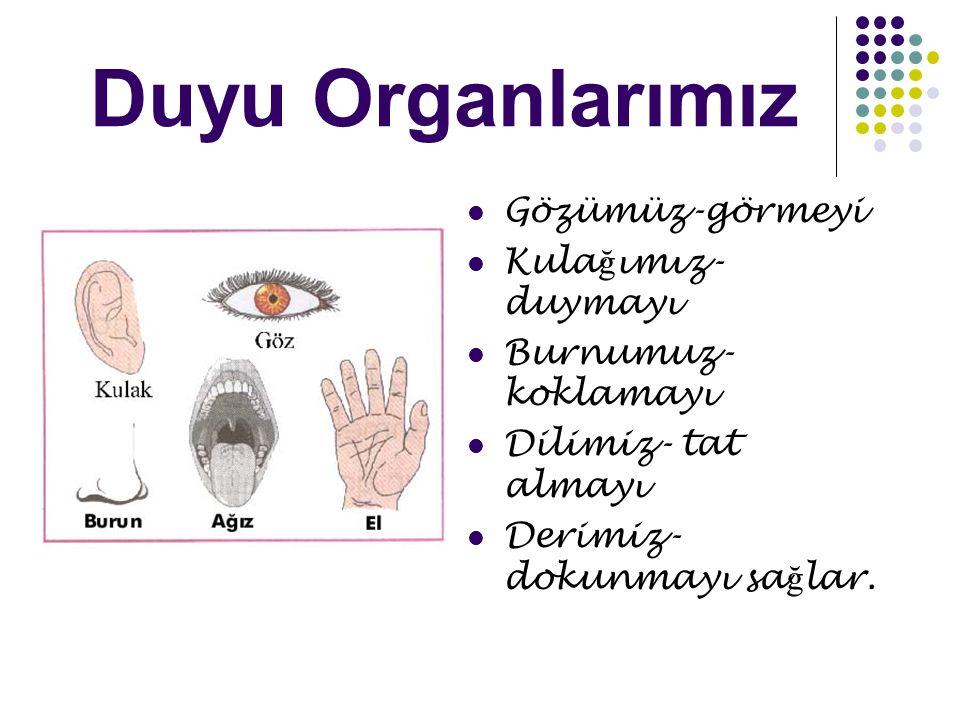 MATERYALİN HAZIRLANIŞI İnsan modeline uygun ve organların Üzerinde tasarlanabileceği bir zemin hazırlandı.