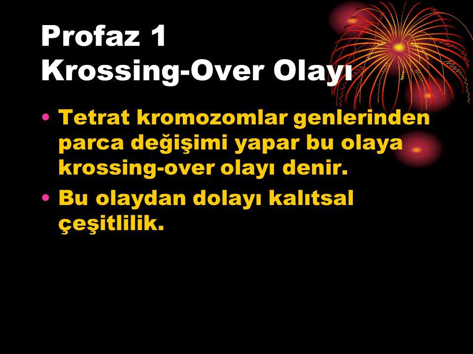 Profaz 1 Krossing-Over Olayı Tetrat kromozomlar genlerinden parca değişimi yapar bu olaya krossing-over olayı denir. Bu olaydan dolayı kalıtsal çeşitl