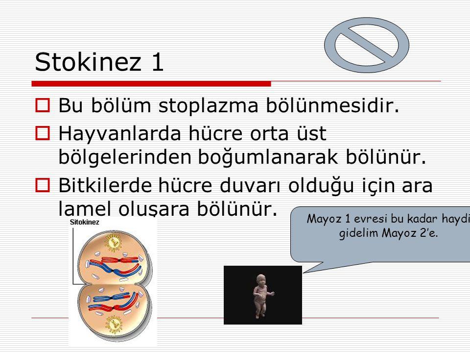 Stokinez 1  Bu bölüm stoplazma bölünmesidir.  Hayvanlarda hücre orta üst bölgelerinden boğumlanarak bölünür.  Bitkilerde hücre duvarı olduğu için a
