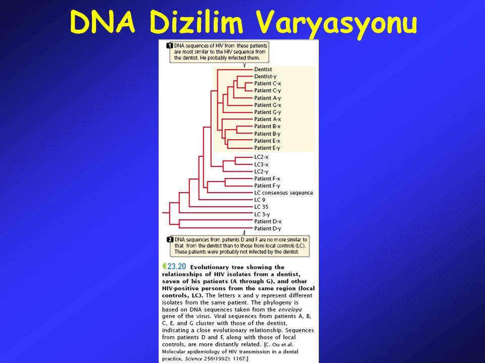 Moleküler Değişim Hızı Nükleotid değişim hızını hesaplayabilmek için farklı organizmalar arasındaki homolog dizilimlere bakılır.
