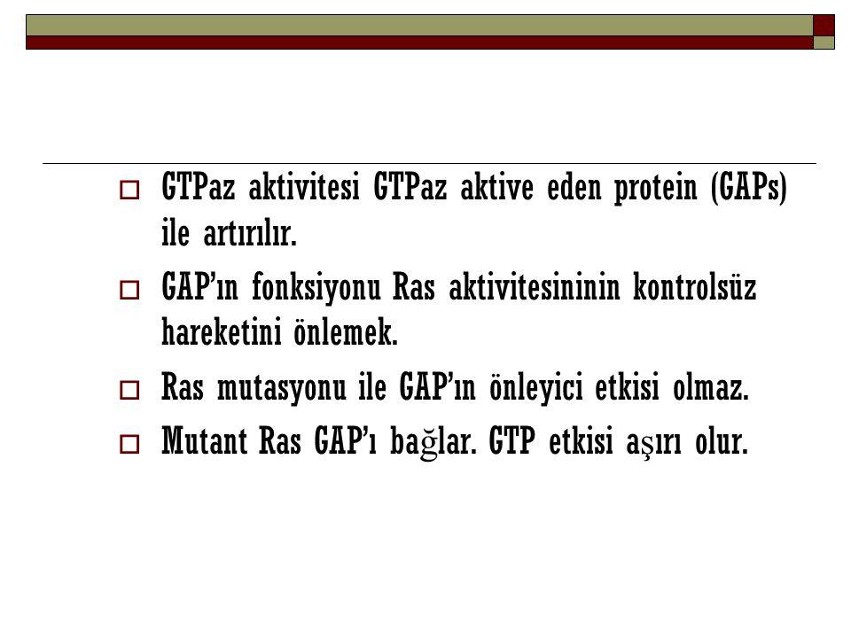  GTPaz aktivitesi GTPaz aktive eden protein (GAPs) ile artırılır.  GAP'ın fonksiyonu Ras aktivitesininin kontrolsüz hareketini önlemek.  Ras mutasy