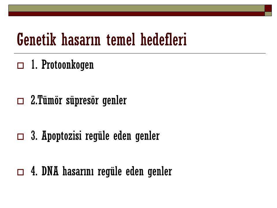 Genetik hasarın temel hedefleri  1. Protoonkogen  2.Tümör süpresör genler  3. Apoptozisi regüle eden genler  4. DNA hasarını regüle eden genler