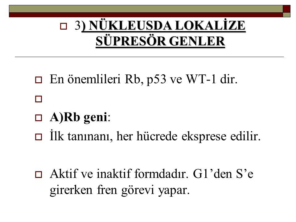) NÜKLEUSDA LOKALİZE SÜPRESÖR GENLER  3) NÜKLEUSDA LOKALİZE SÜPRESÖR GENLER  En önemlileri Rb, p53 ve WT-1 dir.   A)Rb geni:  İlk tanınanı, her h