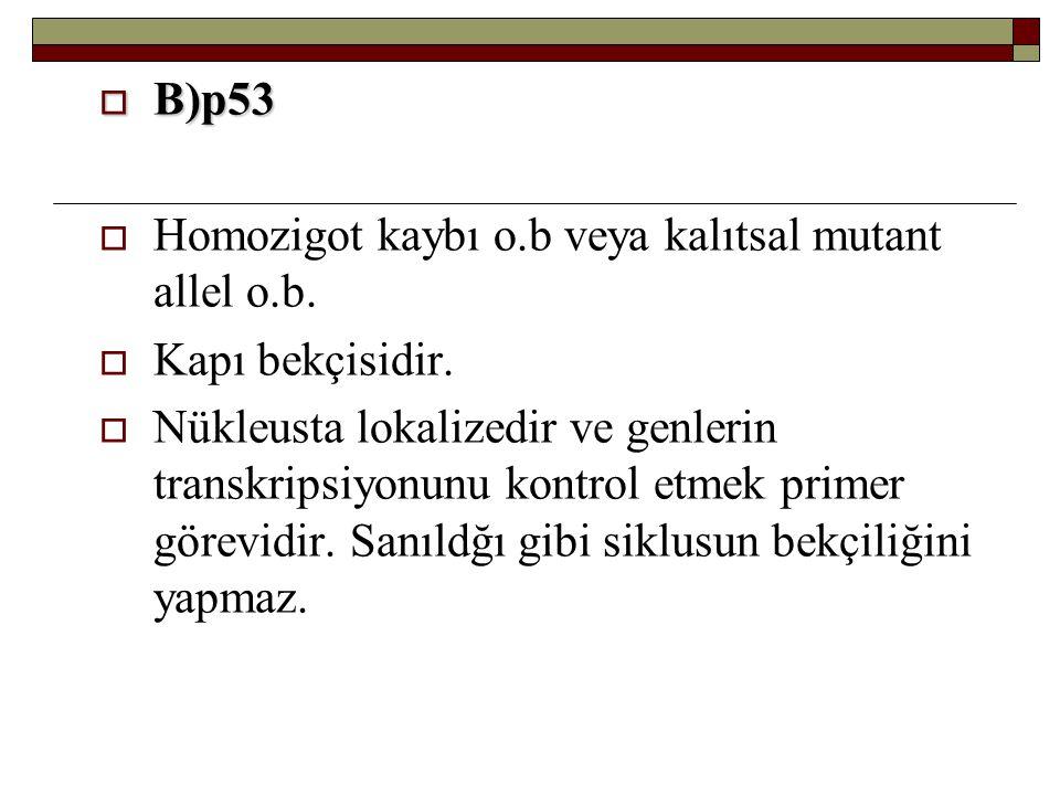  B)p53  Homozigot kaybı o.b veya kalıtsal mutant allel o.b.  Kapı bekçisidir.  Nükleusta lokalizedir ve genlerin transkripsiyonunu kontrol etmek p