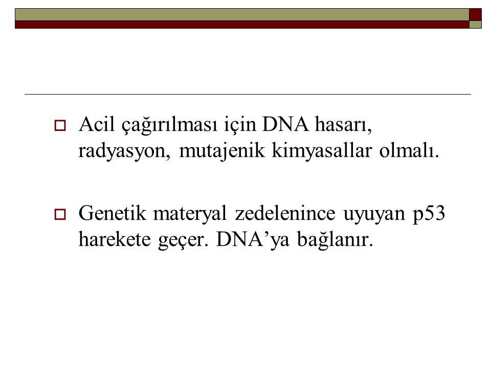  Acil çağırılması için DNA hasarı, radyasyon, mutajenik kimyasallar olmalı.  Genetik materyal zedelenince uyuyan p53 harekete geçer. DNA'ya bağlanır